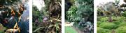 Affordable Landscape Design Services by Landscape Designers Miami