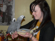 Peaceful African Grey Parrots Ready for new home